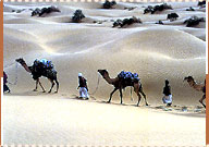 Desert Safari Tour, Jodhpur Travel Guide